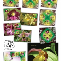 Orhidee salbatice_Wild orchids